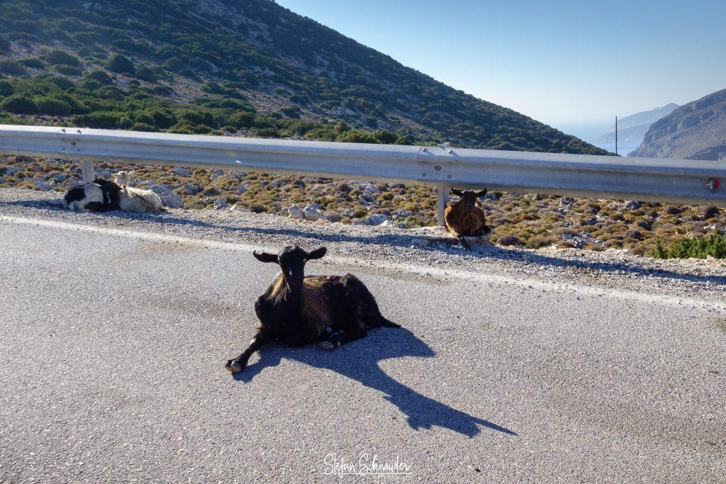 Kalymnos - Ziege